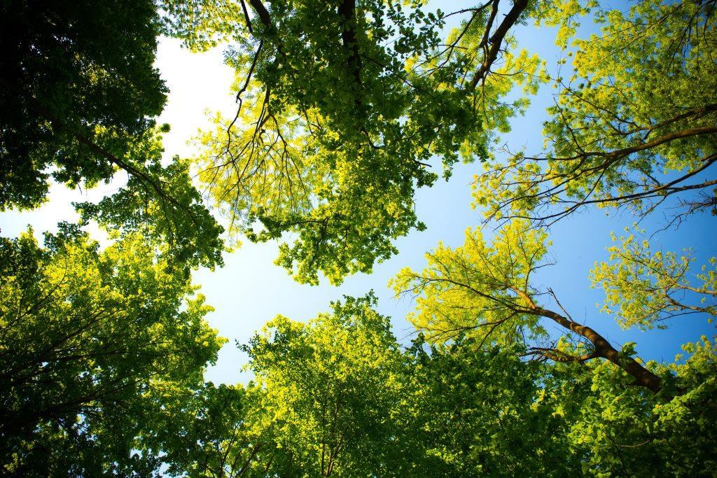 Verdoo - startup-ul social care plantează copaci