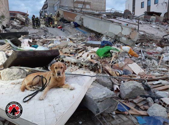 Câinii salvatori caută victimele cutremurului din Albania