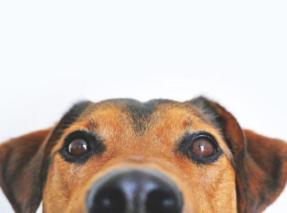 Prima clinică de terapie cu câini din România