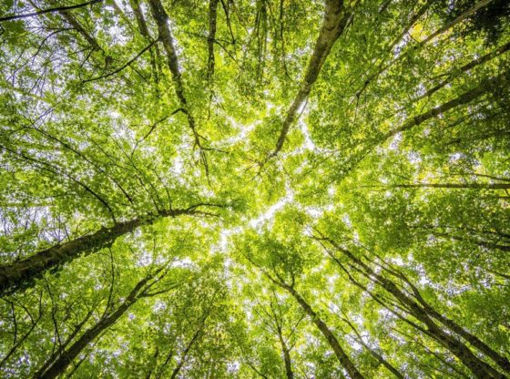 Românii plantează o pădure cât o ţară