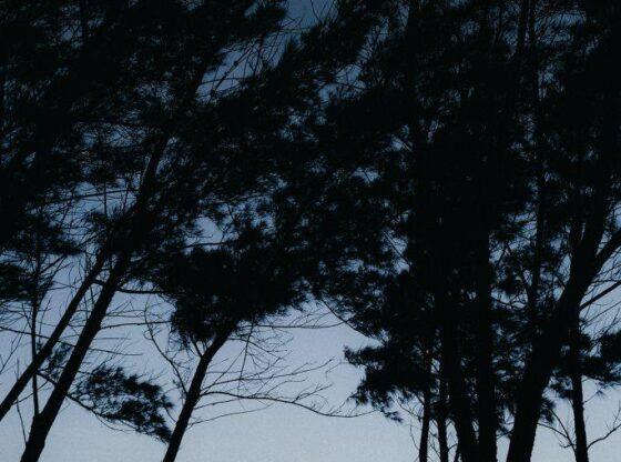 Pădurea JYSK