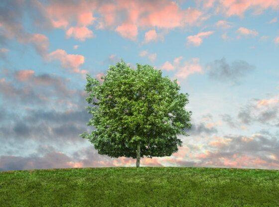 20.000 de copaci au fost plantați